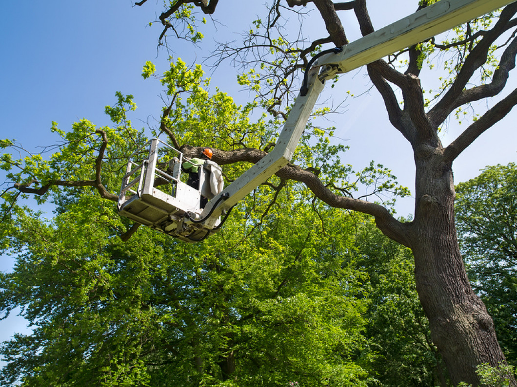 A Fresh Solution for Your Tree Problem in Riverside, CA
